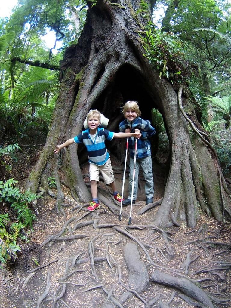 Beech tree cubbies.