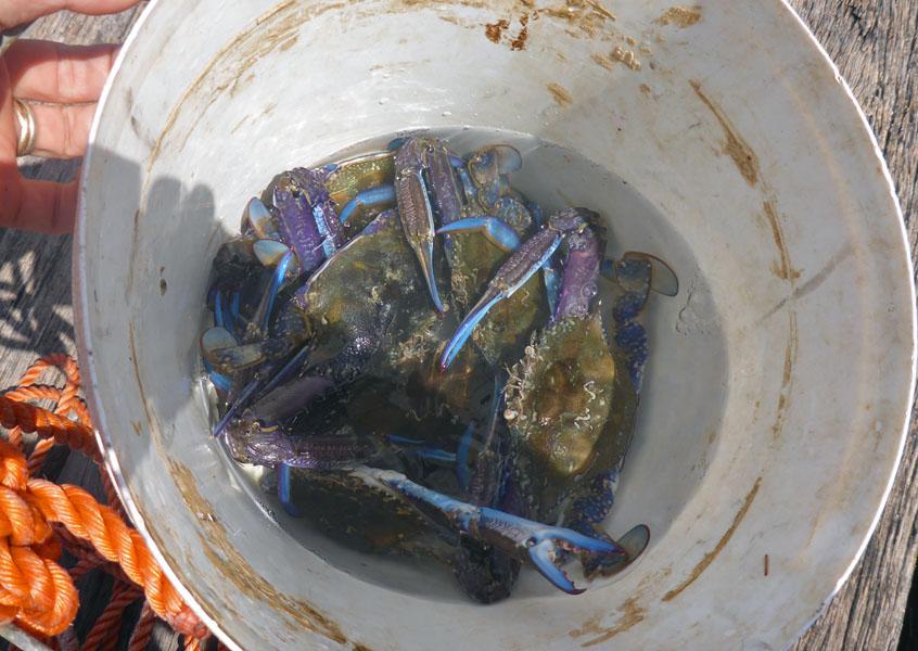 Crabs_P1030602