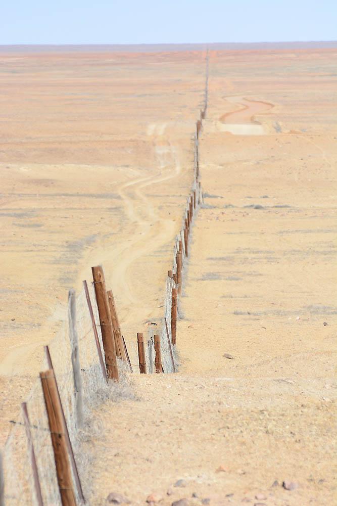 Dog Fence DSC_5713