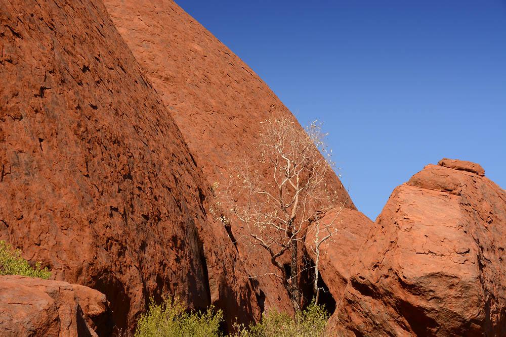 Uluru DSC_3662