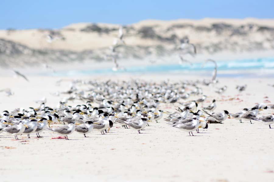 Coffin Bay birds